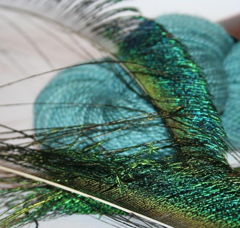 Peacock - blog 2