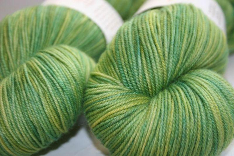 Euphorbia - hazel 2