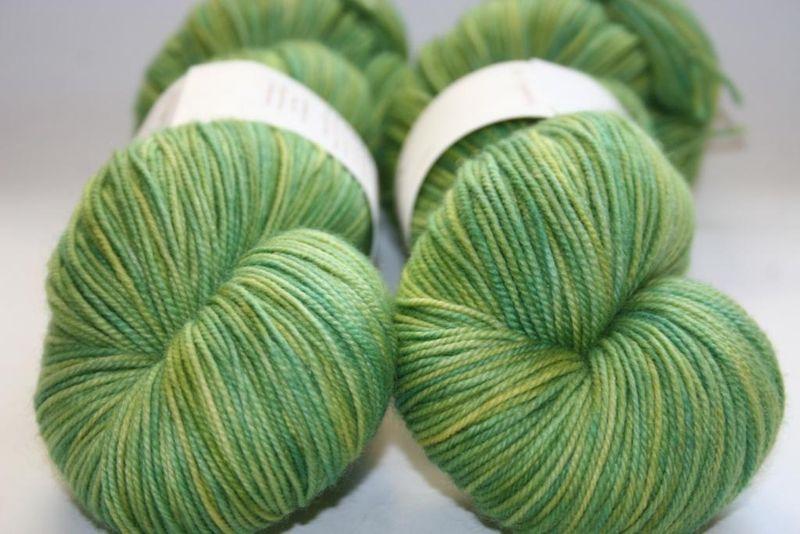 Euphorbia - hazel