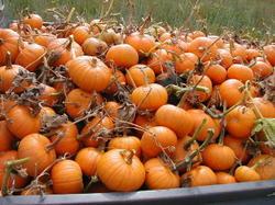 Pumpkinstruck