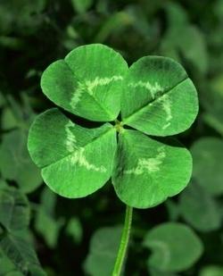 4_leaf_clover