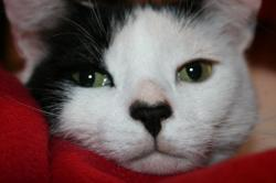 Snuggles_valentine_2