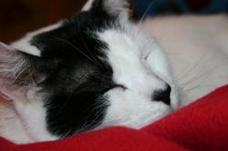 Snuggles_valentine_4